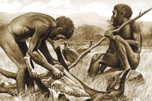 manusia purba mengurangi kebutuhan untuk otot mengunyah besar dengan memasukkan daging ke dalam diet mereka, Makan daging mentah dan membuat alat-alat batu mungkin berada di balik gigi kecil dan wajah manusia dibandingkan dengan kerabat kuno mereka