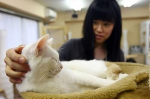 eekor kucing Siamese tangguh bernama Cupcake bertahan selama delapan hari di dalam kotak. Dia dikurung di kotak yang akan dikirim melalui pos oleh ..