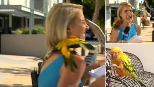 Reporter Brittney Kleyn aneh keluar setelah tanah burung beo di bahunya