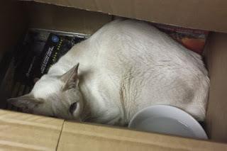Seekor kucing telah bertahan hidup selama delapan hari terperangkap di dalam sebuah kotak.