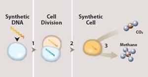 sejumlah ilmuwan lain yang tergabung dalam J. Craig Venter Institute (JCVI) mensintesis jutaan pasangan basa kromosom bakteri Mycoplasma mycoides, kini mereka berhasil menciptakan organisme hidup dengan genom yang sepenuhnya sintetis pertama di dunia.