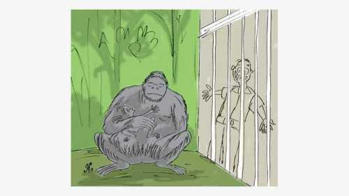 gorila pegang monyet dlm kandang