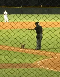 Henley berjlan masuk stadion bisbol Lakeland.