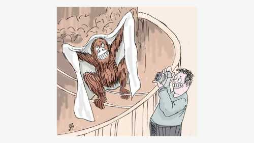 monyet pakai selimut dipotret