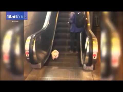 Saking bingung anak anjing turun tangga berjalan yang bergerak ke atas. Dalam video terlihat anak anjing berjalan di tempat di salah satu anak tangga.