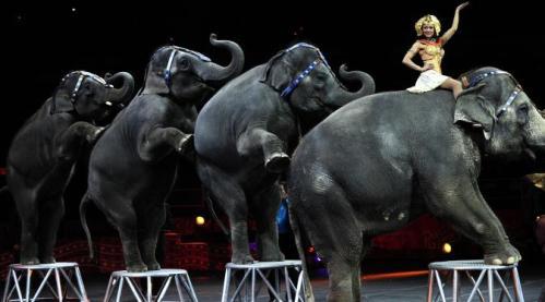 Seiring dengan kepedulian masyarakat tentang populasi gajah di dunia dan bagaimana mereka diperlakukan, membuat Amerika Serikat menentang penggunaan gajah dalam aksi pertunjukan sirkus. Dengan begitu, Ringling Bros dan Bamum and Bailey Circus memberhentikan atraksi gajah-gajah milik mereka yang sudah menjadi tradisi menghibur penonton di Amerika selam satu setengah abad lalu.