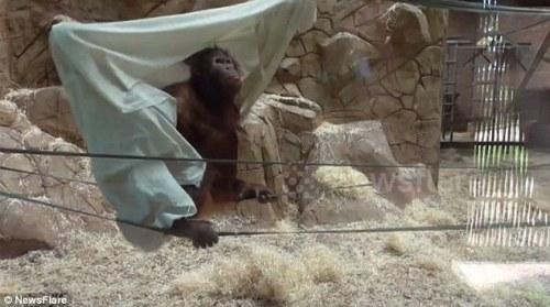 Kebun binatang , yang duduk di antara Birmingham dan Leicester , dibuka pada tahun 1963. Itu adalah anak otak Molly Badham dan Nathalie Evans yang mencintai binatang