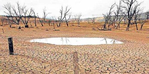 Fenomena cuaca kering atau El Nino yang melanda Indonesia dan hampir seluruh wilayah Asia merusak rantai pangan global. Dampak El Nino kali ini sangat parah dan mempengaruhi jumlah penangkapan ikan, harga energi serta pasokan unggas global. Foto : Kekeringan El Nino. ©Reuters