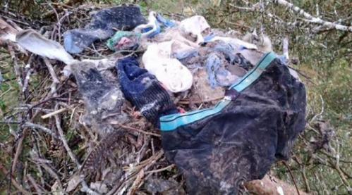 Dave Clement, seorang polisi hutan, menemukan sepasang kaus kaki dan celana dalam berwarna biru navy melapisi sebuah sarang burung dimana ada dua bayi ...