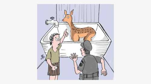 anak rusa mandi di bak