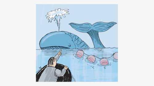 Paus biru terperangkap jaring nelayan di lepas pantai California Selatan. Ilustrasi : Handining.