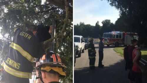 New Jersey wanita terjebak di pohon di Eglington Cemetery di Clarksboro , Gloucester County, New Jersey , bermain Pokemon Go . | Bodoh News Today