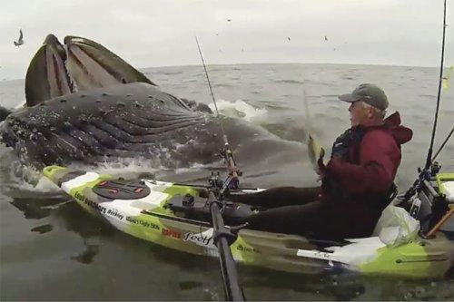 Eddy Willis bertemu paus humpback di lepas pantai California.