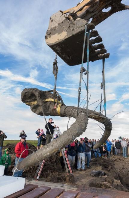 Para ahli bisa memperkirakan ukuran dan berat mamut berdasarkan fosil yang ditemukan. Foto by : idnesia.com