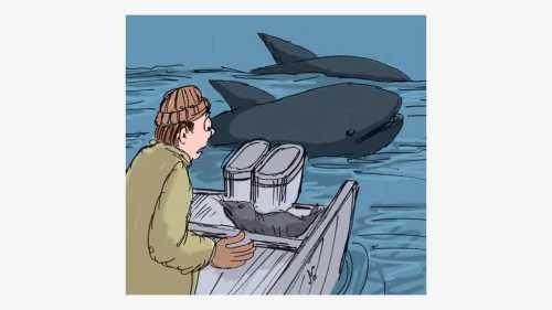 Paus kelaparan memburu seekor anjing laut yang ketakutan, langsung melompat ke geladak kapal. Ilustrasi : Handining.