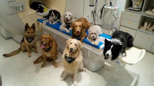Sejumlah anjing terlatih, dalam foto tanpa tanggal, berada di ruang pemindai otak di Pusat