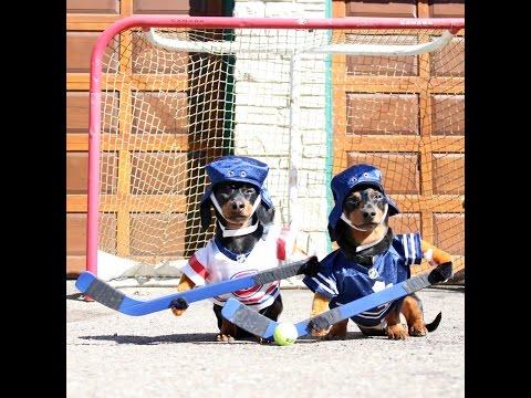 Crusoe dan Oakley siap bermain hoki.