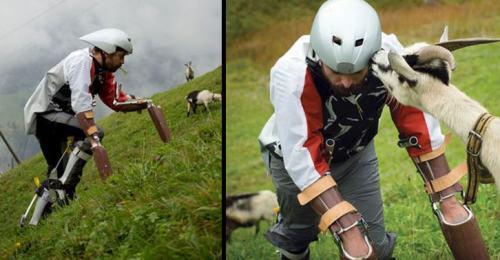Penelitian menggunakan kaki palsu saat berada di alam Pegunungan Andes. Penliti mencoba bergaul dengan kambing gunung.