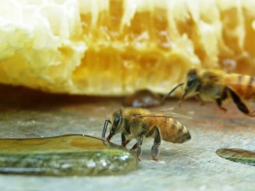 Beberapa orang menganggap madu tidak memiliki manfaat bagi tubuh kita. Kadang madu hanya dijadikan pemanis di dalam minuman. Padahal apabila ketahui banyak sekali manfaat dan kegunaan bagi tubuh kita. Salah satu contoh yaitu menjaga stamina tubuh kita