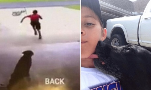 Aksi mencium anjing tetangga milik tertangkap kamera.