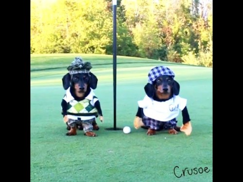 Cruose dan Oakley bermain golf.