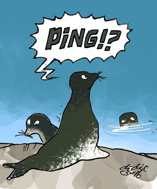 Bunyi aneh ping membuat anjing laut ketakutan. Ilustrasi : Didie SW.
