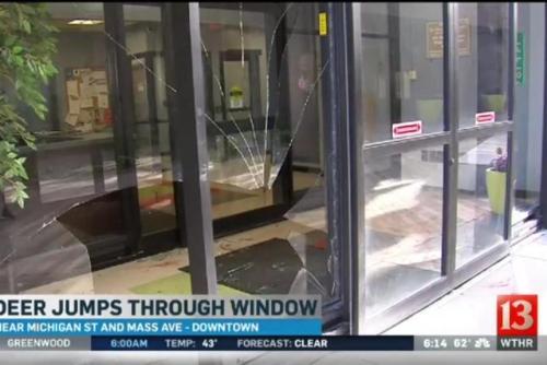 Kaca tebal lobi apartemen pecah berantakan tidak kuat menahan terjangan rusa yang
