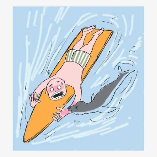 Anjing laut yang dikira jinak akan jadi ganas jika diganggu. Merasa ada ancaman di sekitarnya, anjing laut langsung menggigit lengan atas Nathan Shepherd. Ilustrasi : Handining.