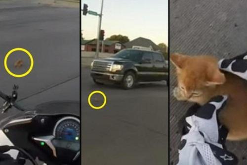 Anak kucing melintas di jalan saat lampu lalu lintas menyala merah. Anak kucing bukannya menyeberang, malah lari menuju bawah mobil
