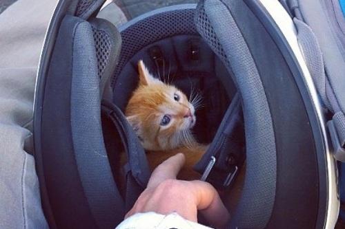 Anak kucing yang terluka telinganya langsung diamankan pengemudi mobil dan meraw