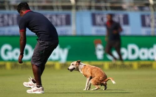 Dasar anjing liar mengganggu jalannya pertandigan kriket dengan masuk lapangan pertandingan tanpa izin petugas. Sialnya, anjing liar masuk lapangan hanya ingin buang hajat.