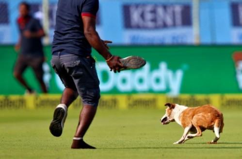 Karena susah diberi pengertian petugas keamanan, anjing liar pun dilempar sepatu agar keluar lapangan segera.