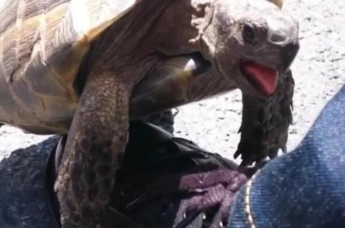 Kura-kura mendapat terlalu ramah dengan sepatu pria di Istanbul. Screenshot: Newsflare
