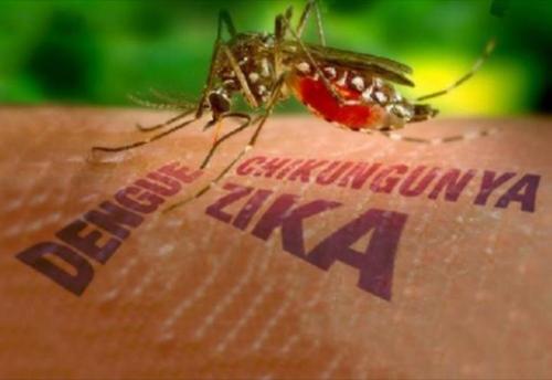 Kasus pertama penularan lokal virus Zika di Amerika Serikat telah dilaporkan terjadi di Texas, kata Departemen Kesehatan pada Selasa (2/2). Zika, yang terutama menular melalui gigitan nyamuk Aedes yang terinfeksi, diduga menjadi penyebab cacat pada bayi seperti mikrosefali, atau kepala kecil.