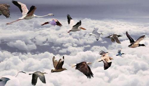 Foto: Gerry Penny / EPA Dalam kamus Dictionary of Birds disebutkan bahwa migrasi merupakan pergerakan populasi burung yang terjadi pada waktu tertentu setiap tahun, dari tempat berbiak menuju tempat mencari makan selama iklim di tempat berbiaknya itu tidak memungkinkan. Di tempat baru tersebut, burung-burung ini tidak akan berbiak, dan baru berbiak jika sudah kembali ke tempat asal pada musim berbiak berikutnya (Campbell, 1985).