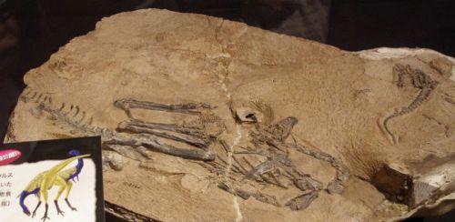 Fosil binatang purba Dinosaurus Inextricabilis yang ditemukan di Xinjiang.