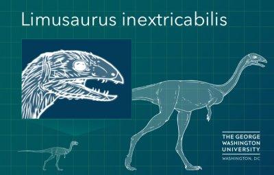 limusaurus-inextricabilis