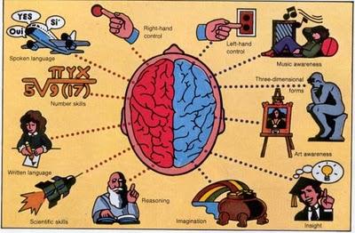 Otak kanan mempunyai fungsi untuk menunjang kreativitas dan fungsi dari otak kanan adalah untuk menangani cara berpikir manusia yang kreatif misalnya adalah dalam hal berkomunikasi atau linguistik. Biasanya cara kerja dari otak kanan sudah tersusun dan cenderung tidak memikirkan hal-hal yang terlalu detaol. Misalnya adalah mereka yang bekerja sebagai seniman. Sedangkan fungsi dari otak kiri adalah untuk untuk menangani masalah kecerdasan dalam hal analitikatau dalam hal kecerdasan matematis. otak kiri bermanfaat dan bisa digunakan untuk memahami berbagai hal yang kompleks dan sangat membutuhkan pikiran yang detail. Orang yang mengandalkan otak kiri biasanya berprofesi sebagai peneliti atau scientist.