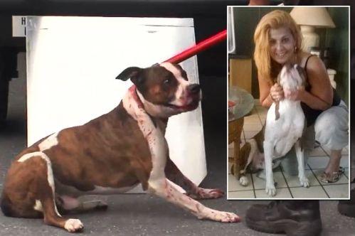 Brenda Guerrero digambarkan dengan anjing, Scarface, sebelum serangan (Foto: Facebook)