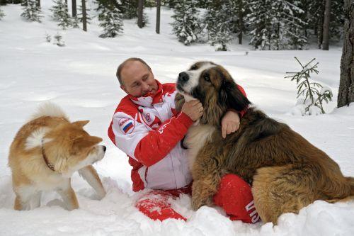 Presiden Rusia Vladimir Putin mengambil anjing, Bulgaria gembala Buffy (L) dan akita Yume, untuk berjalan-jalan di hutan bersalju di luar Moskow (Gambar: Getty)