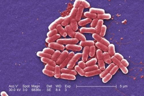Banyak orang sangat khawatir dengan penyebaran bakteri. Apalagi banyak bakteri super yang kini semakin resisten dengan antibiotik. Kekhawatiran ini semakin terpicu dengan temuan fakta baru dari ilmuan. Salah satunya yang menyatakan bakteri bisa berkomunikasi melalui sinyal listrik.Itulah kesimpulan penelitian terbaru yang mempelajari biofilm, yakni lapisan tipis sel dan lendir yang terbentuk setiap kali bakteri menempelkan diri ke permukaan. Penelitian ini dapat memberi informasi kepada masyarakat bagaimana makhluk mikroskopis hidup.
