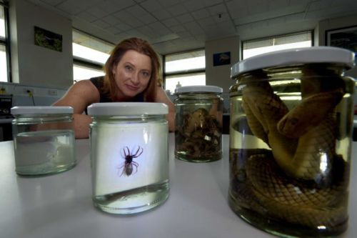 Foto: Dr Ronelle Welton mengatakan tidak ada yang tercatat kematian laba-laba gigitan di Australia sejak tahun 1999. (Disediakan: University of Melbourne)
