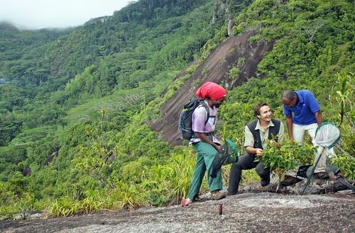 Dr. Kaiser-Bunbury (tengah) dan rekan-rekan di pulau Mahe, Seychelles. Kredit: Christopher Kaiser-Bunbury.