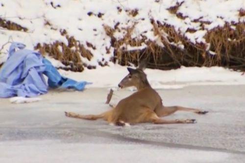 Rusa ini tidak bisa menggerakkan keempat kakinya karena membeku akibat es udara dingin